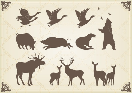 wild hog: Vintage hunting forest animals illustration collection Illustration