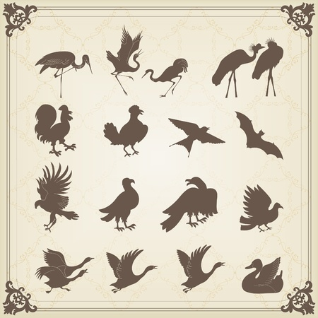 Vintage birds illustration collection Stock Vector - 10492638