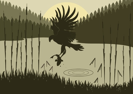 osprey: Osprey hunting in wild nature foliage illustration Illustration