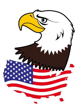 bald eagle: American bald eagle
