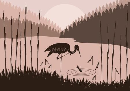 canne: Heron in illustrazione fogliame natura selvaggia