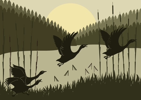 migrating animal: Animated flying geese flock in wild forest foliage illustration