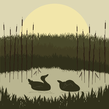 Wild duck couple in lake foliage Stock Vector - 10568947