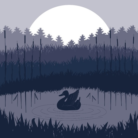 Wild duck couple in lake foliage Vector