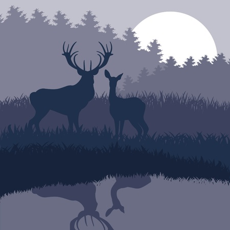 Rain deer family in wild night forest foliage illustration Stock Vector - 10574335
