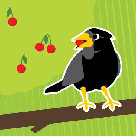 Black starling bird eating cherries Vector