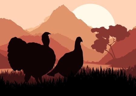 turkey cock: Wild turkey hunting season landscape background illustration