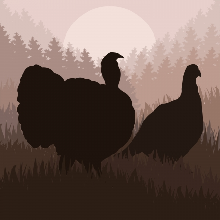 Wild turkey hunting season landscape background illustration Stock Vector - 10803668