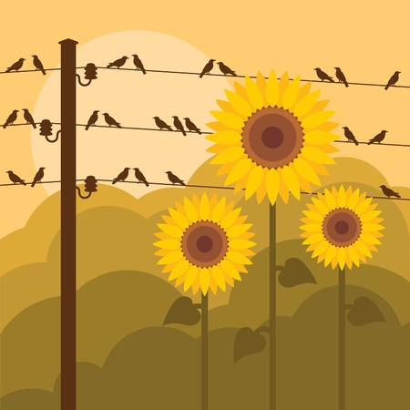 flock of birds: Birds and sunflowers in autumn countryside landscape background illustration