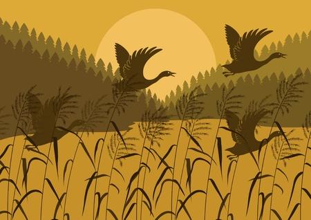 орнитология: Дикие утки в лесу иллюстрация пейзаж озера Иллюстрация