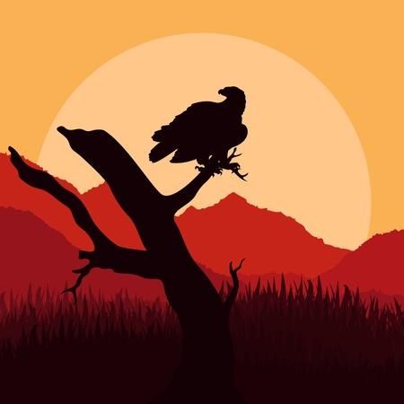vulture: Eagle hunting in wild nature landscape illustration