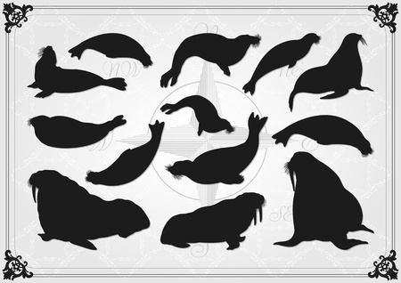Sea lion and seal illustration collection background Vector