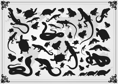 salamandra: Anfibios reptiles ilustración colección de fondo Vectores