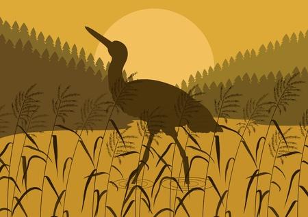 wader: Stork bird wild nature landscape illustration