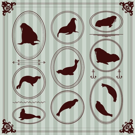 Sea lion and walrus seal vintage frames and elements illustration collection Vector