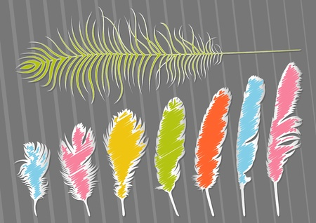 Colorful bird feathers illustration collection background Vector