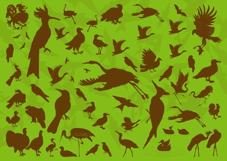 Birds and ecology illustration collection background Vector