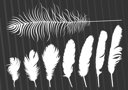 a feather: Bird feathers illustration collection background Illustration