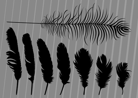 fowl: Bird feathers illustration collection background Illustration