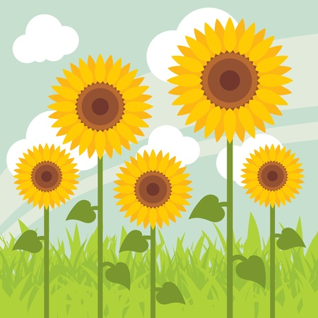 sunflower seeds: Yellow sunflowers landscape background illustration