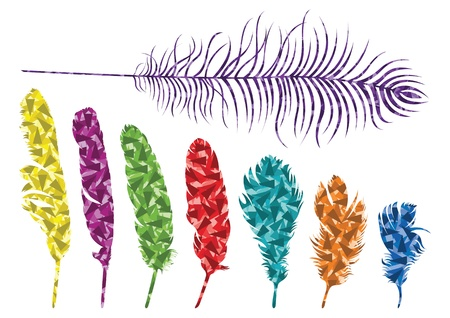 Colorful bird feathers background illustration Vector
