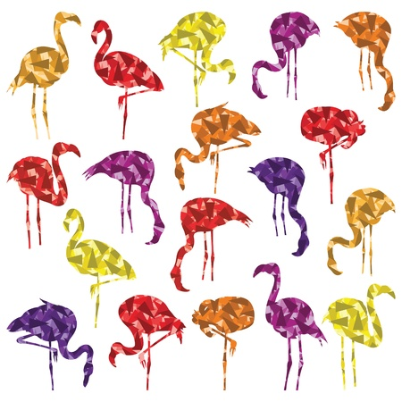 aquatic bird: Flamingo bird silhouettes and feathers illustration collection background vector