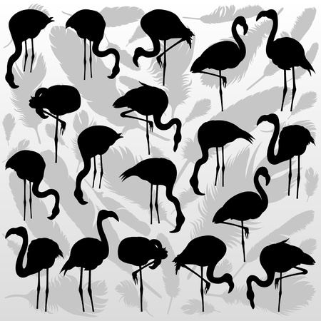 migrating birds: Flamingo bird silhouettes and feathers illustration collection background vector