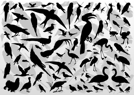 Birds and feathers silhouettes illustration collection background vector Vector