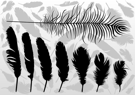 peacock feather: Black bird feathers illustration collection background vector