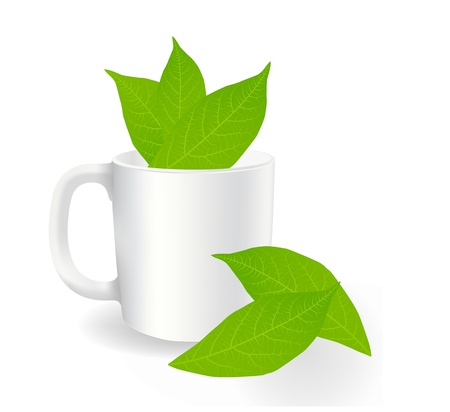 Fresh, green tea leaves on a white background with cup vector Vector