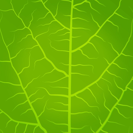 Fresh, green tea leaves vector background Vector