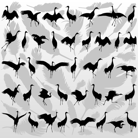 crane bird: Crane bird and feathers detailed silhouette illustration collection background