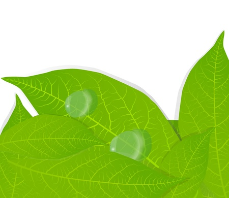 Green leaves background for poster Stock Vector - 13440955