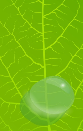Green leaves background for poster Vector