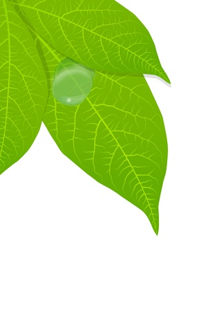 Green leaves background for poster Stock Vector - 13444874