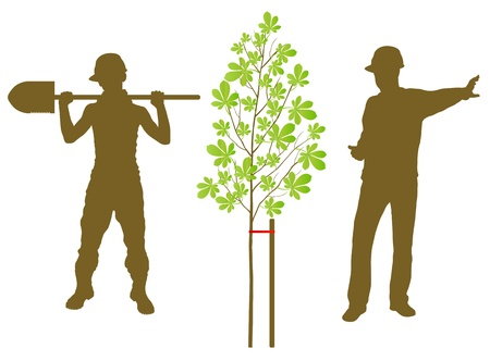 chestnut tree: Chestnut tree plant vector background with worker and gardener for poster