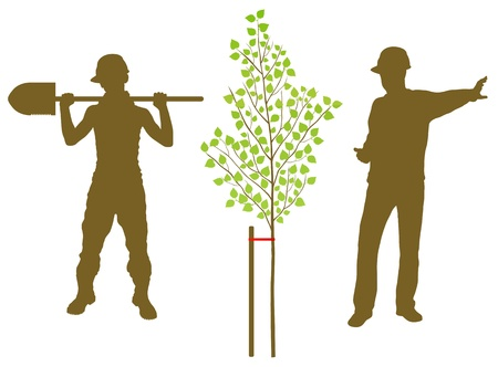 Birch tree plant vector background with worker and gardener for poster Stock Vector - 13820906