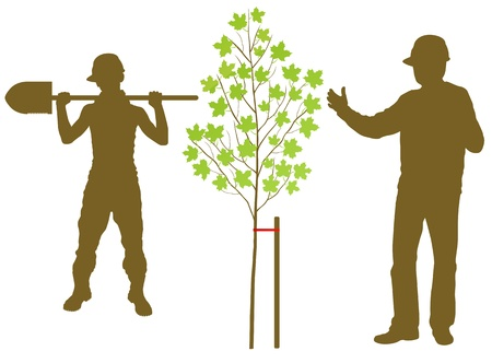 Maple tree plant vector background with worker and gardener for poster Vector