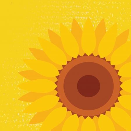graine tournesol: Vecteur de fond abstraite de tournesol