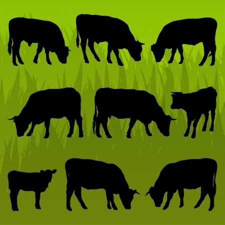 domestic cattle: Beef cattle detailed silhouettes illustration collection background vector