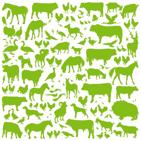 Farm animals detailed silhouettes illustration collection background vector Vector
