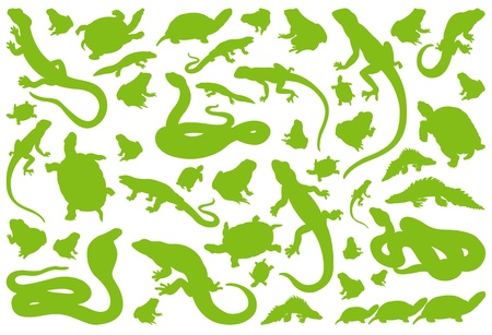 Amphibian reptile environmental illustration collection background vector Stock Vector - 14355891