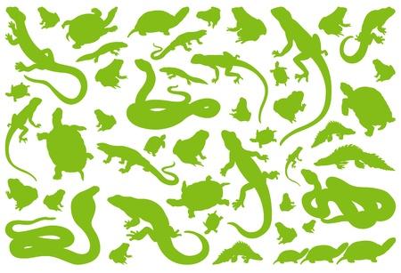 salamandre: Amphibiens reptiles de l'environnement vecteur de fond illustration collection Illustration
