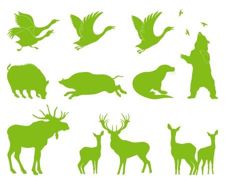ermine: Bosque de la ecolog�a animal conjunto de vectores de fondo para el cartel Vectores