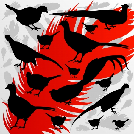 hunting season: Pheasant bird detailed hunting season silhouettes illustration collection background vector