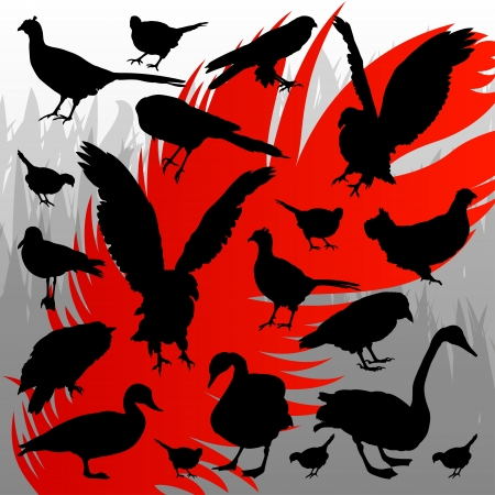 Forest hunting bird detailed silhouettes illustration collection background vector Vector