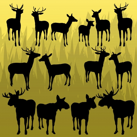 taxidermy: Deer and moose horned hunting trophy animals illustration collection background vector