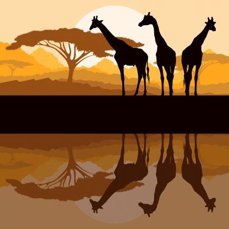 jirafa: Jirafa siluetas de la familia en �frica monta�a salvaje naturaleza ilustraci�n vectorial paisaje de fondo