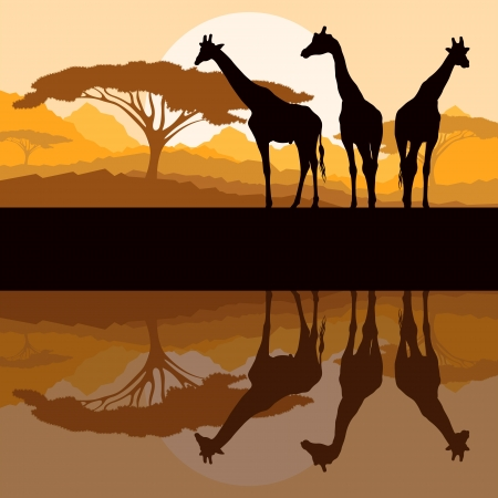 africa sunset: Sagome di famiglia Giraffe in Africa selvaggia montagna nave illustrazione vettoriale paesaggio di sfondo