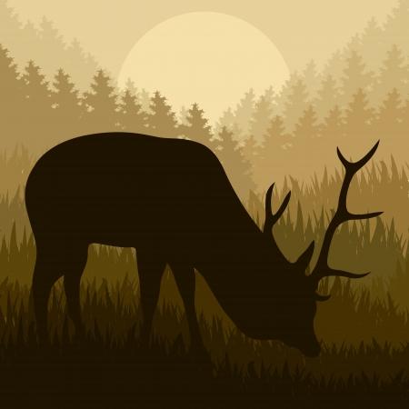 Deer in wild nature forest landscape background illustration vector Stock Vector - 15272113